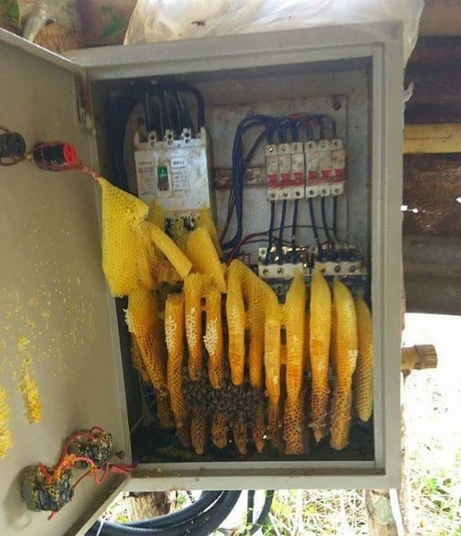 Problemas de mantenimiento de tableros